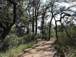Vintage_Oaks_Trails