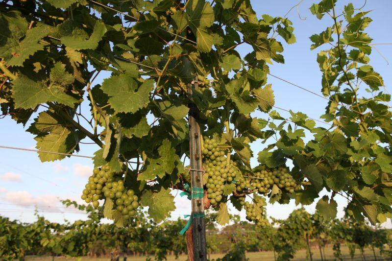 October_is_Texas_Wine_Month
