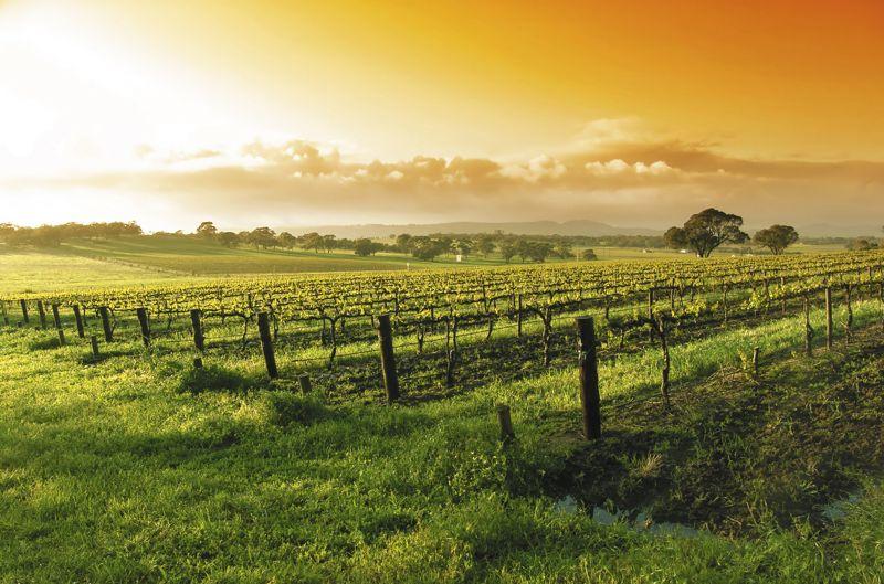winesocietyofengineers.org