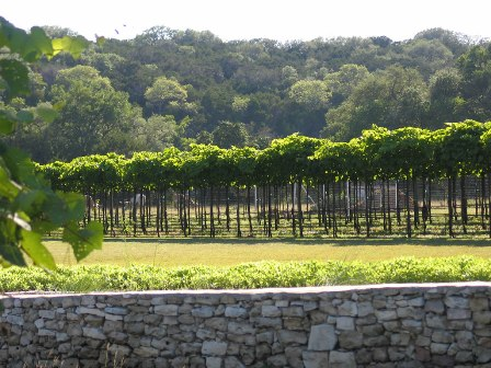 Dry Comal Creek Vineyards image