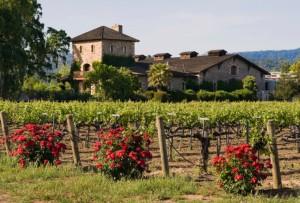Wine, Home, Taste, Tour, Vineyard