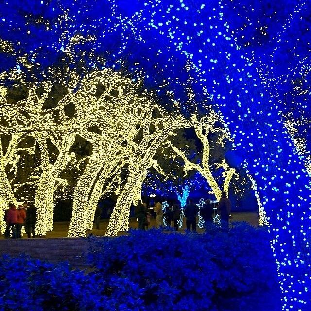 https://www.flickr.com/photos/sheilascarborough/11387842866/ - Best Places To See Holiday Lights In The Hill Country