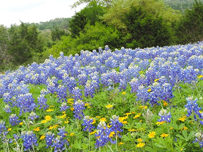 Texas Hill Country Land - Homesite #1582